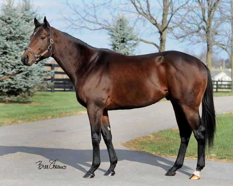 Central Banker - Multiple Stakes winner including G2 Churchill Down Stakes (107 Beyer)