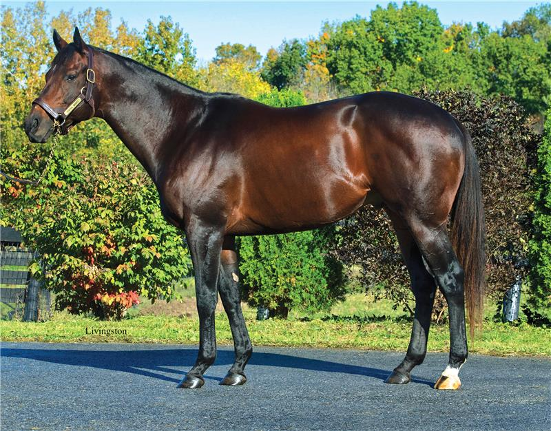 Central Banker - NY's Leading Son of Speightstown