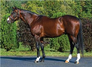 Teuflesberg - Sire of Breeders' Cup Sprint-G1 winner TRINNIBERG from his first crop
